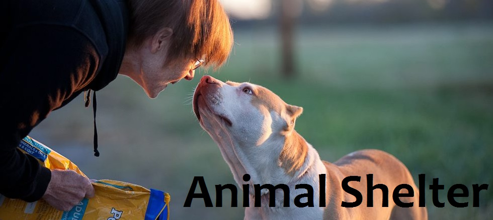 Volunteer animal shelter